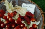Strawberry Corn