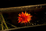 Chihuly_(20_of_23).jpg