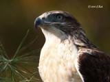 Raptor Shoot-2010Oct23-1651 S.jpg