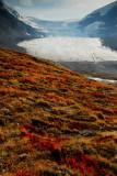 Columbia Icefields, Jasper National Park