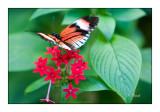 Butterfly - 3735