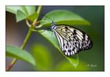 Butterfly - 3748