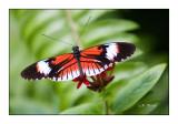 Butterfly - 3765