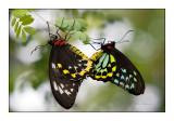 Sexy Butterflies - 3769