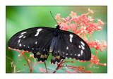 Butterfly - 3780