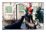 Christmas Kiss - Marineland d'Antibes - 4185