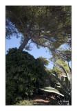 Jardin Méditerranéen - 2161