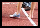 herculis - 0754