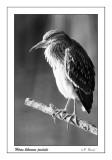 Heron - 1685