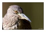 Heron - 1436