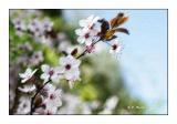 Pastel : flowers