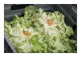 Salads anyone