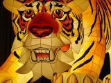 Tiger Lanterne
