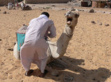 My Camel, who really wasn't in the mood to do this.  A loose saddle is not really a good way to ride a camel  :)