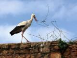 A Stork - Tunisia