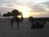 The Desert Experience
