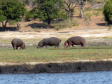 Along the Chobe River