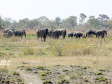 There are Those Elephants Again