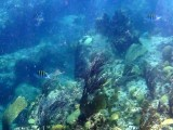 Pictures taken while on a snorkeling trip