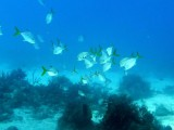 Pictures taken while diving off of West Caicos