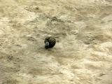 A Dung Beetle with his prize