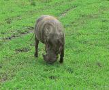 More Warthog