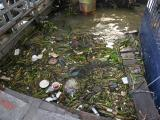 rubbish in the water