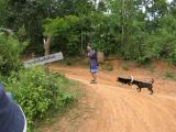 man hunting with his dogs  (he had a very very very long long gun with him)