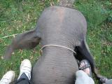 note, some pics will be blurry due to I'm on an elephant moving and the other elephants are moving also