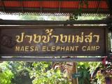 Friday morning I left at 8am to go to the Maesa Elephant Camp  (120B to get in, and well worth it)