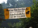 met the new born baby boy  (elephant)