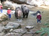 bath time for the elephants