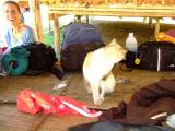 one of the many cats at the elephant camp