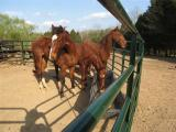 few horses in the round pen