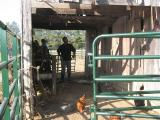 working inside the barn