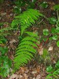 some kind of wild fern