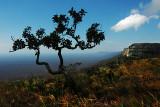 Tucabaca Valley in Santiago de Chiquitos, Bolivia