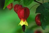 La Vispera Flowers