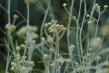 La Vispera Garden Flowers