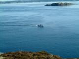 Kaare Nilssen igjen en fare for fiskene i Rongesundet og Hjeltefjorden