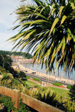 Palm Tree and seafront at Scarborough