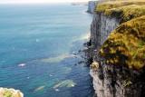 Bempton Cliffs Filey