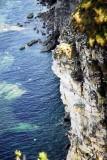 Bempton Cliffs and nesting birds