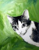 Grey Tabbey Cat