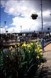 Stalybridge flowers