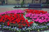 Stalybridge in Bloom