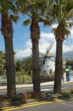 Palm Trees and the Windmill