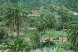Palm Trees La Gomera