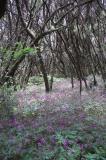 Woods on La Gomera Island