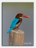 Birds of Thailand 2007